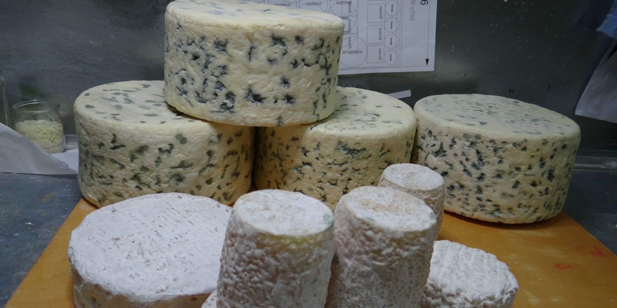 étape de travail et préparation de l'expédition des faux fromages en Italie