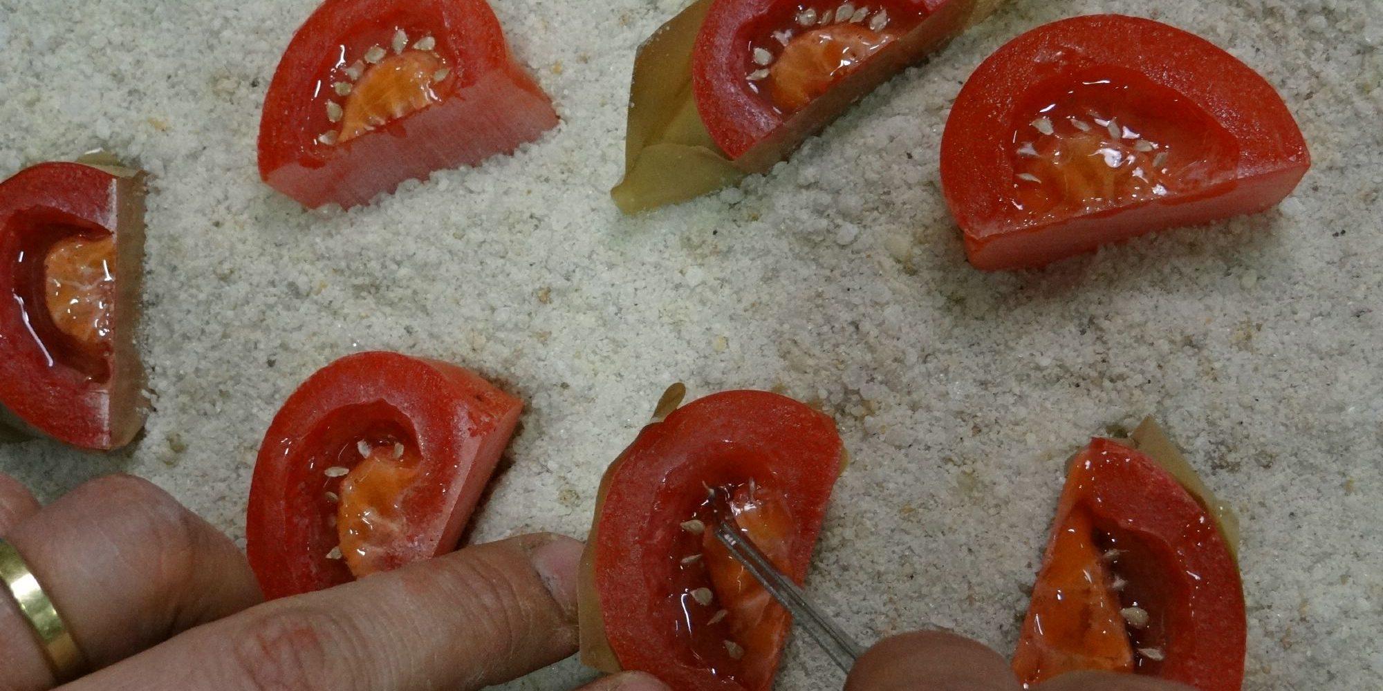 disposition des faux pépins dans les quartiers de tomates factices en résine