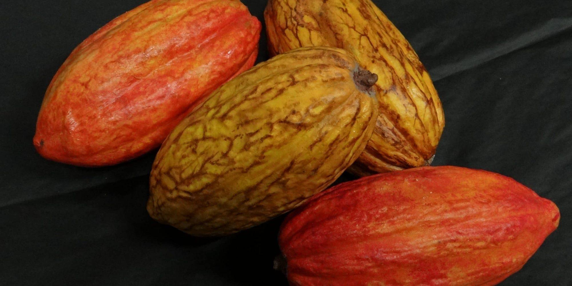 décoration salon professionnel : factices alimentaires de cabosse de chocolat fraîches pour les chocolats Cémoi - Atelier Cobalt Fx