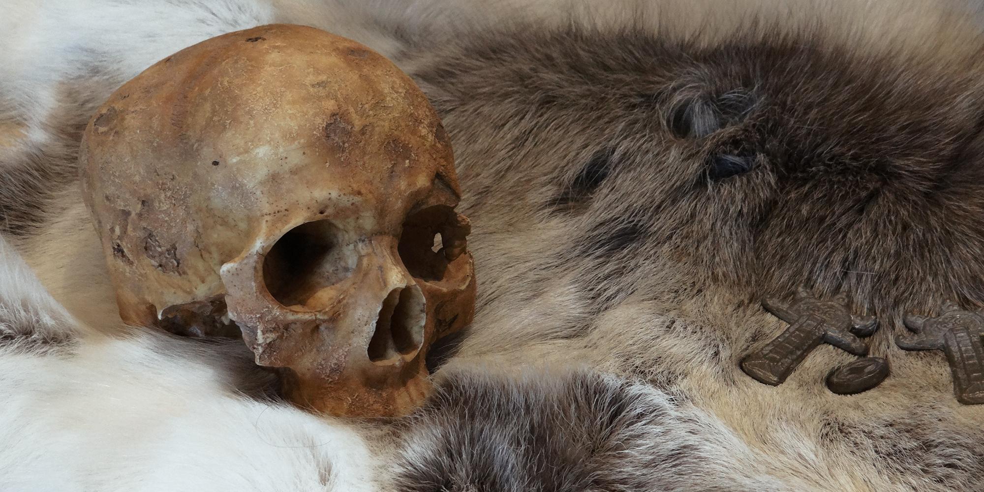 fac simile de crâne humain sculpté en résine avec des reconstitutions et fac similé de fibules et pièces