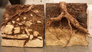 reconstitution de coupes géologiques de sol à truffe pour musée et exposition