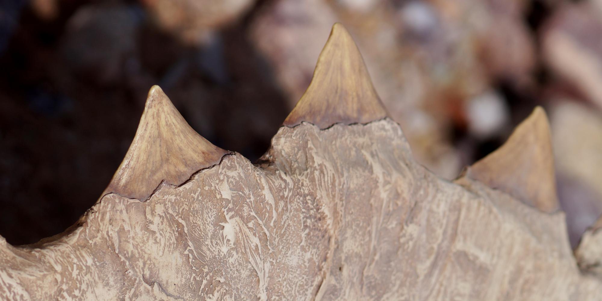détail de sculpture de fac simile d'os fossile