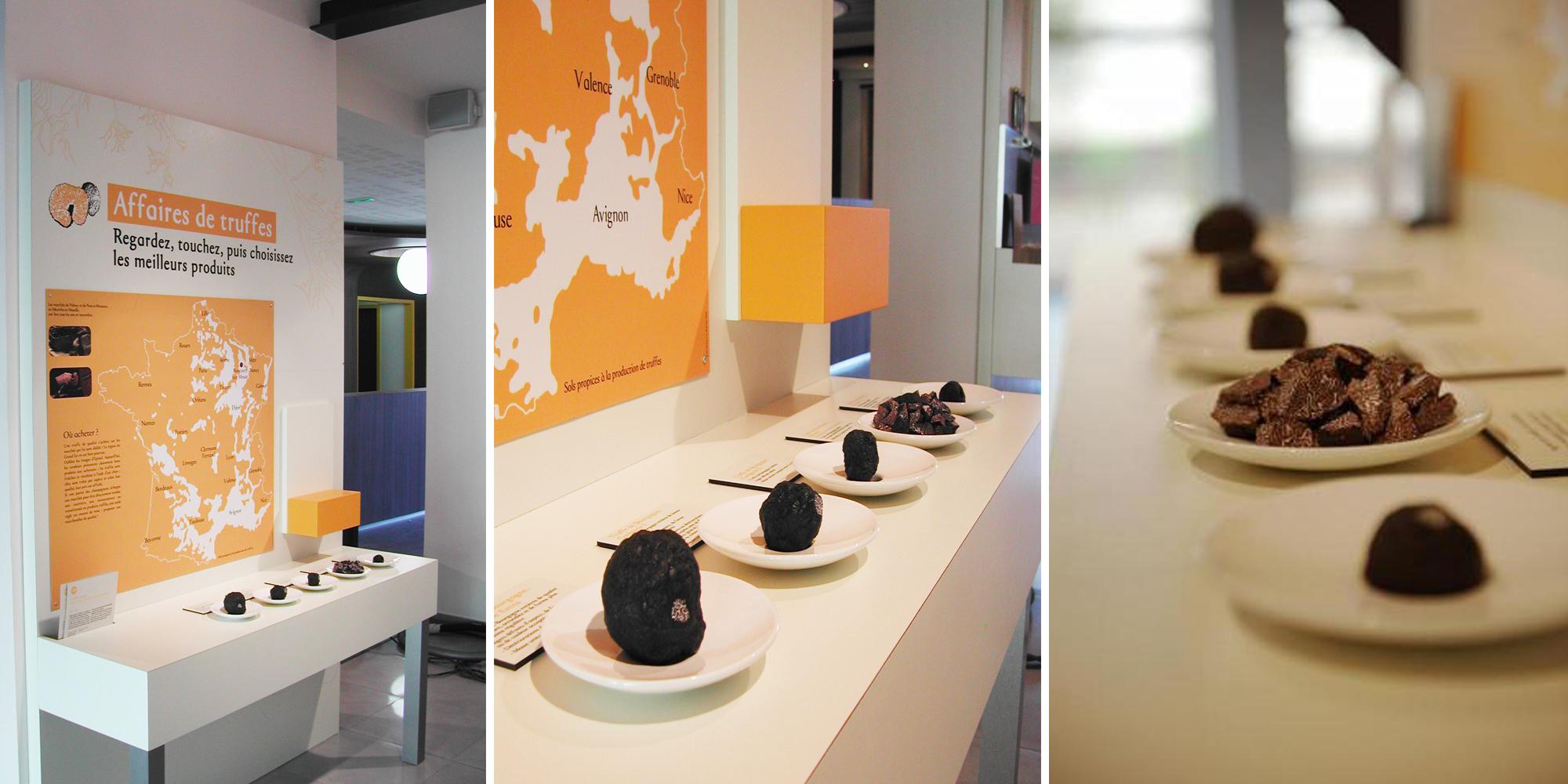 disposition de différentes truffes factices créées par l'atelier Cobalt Fx au Musée Maison des Truffes et de la trufficulture