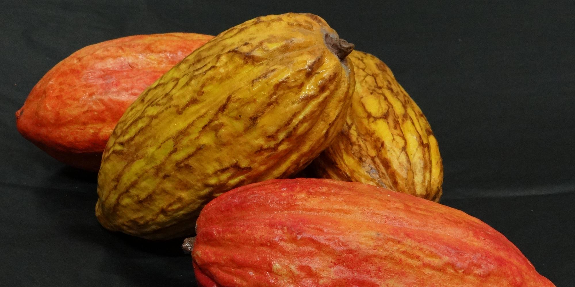 fausses cabosses de cacao sculptées en résine pour salon professionnel