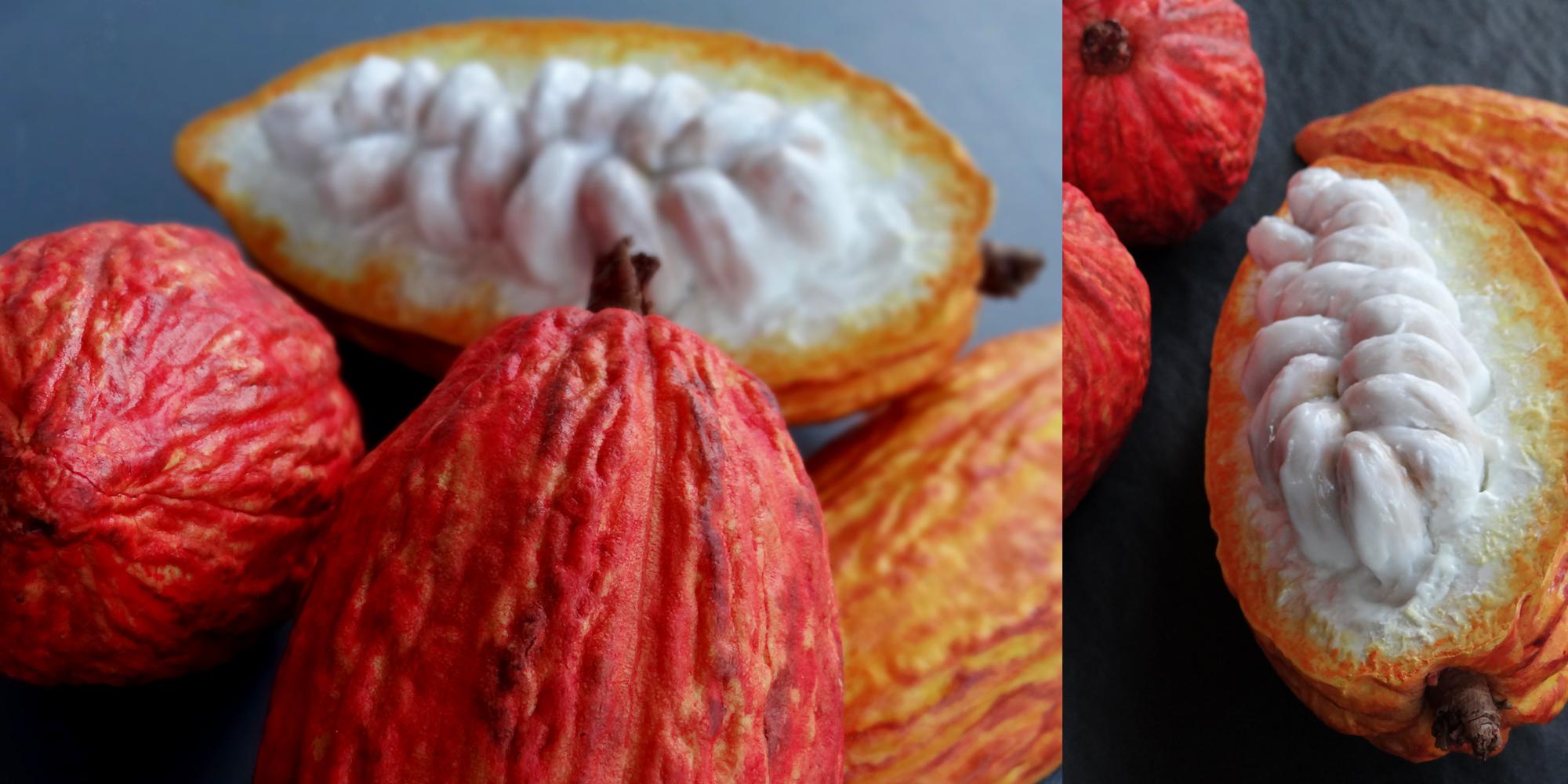 réalisation sculpture de cabosses de cacao fraiches ouvertes avec fèves visibles